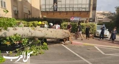 بيتاح تكفا: مواطنان ينجوان بعد انهيار شجرة على سيارتهم