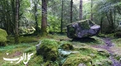 ما هي الغابات الحجرية؟