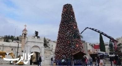 الناصرة: تركيب أكبر شجرة ميلاد في المنطقة