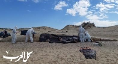 سلطة الطبيعة: الحوت نفق نتيجة مادة القار