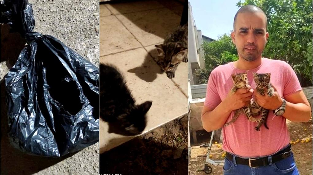 إنسانية: مواطن من قلنسوة ينقذ قططًا