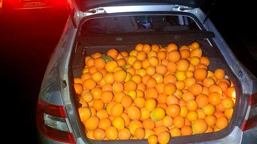 النقب: اتهام رجل بسرقة محاصيل برتقال