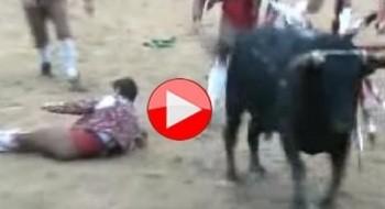 بالفيديو: مبارزة الثيران..هواية خطيرة ومؤلمة!