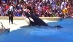 بالفيديو: عرض طريف لحوت موهوب