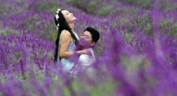 حقول اللافندر تجذب الأزواج الشابة في الصين