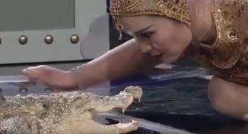 فيديو: صينية تقبّل تمساحاً أثناء عرض