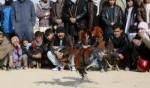 مصارعة الديوك في أفغانستان