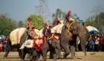 مهرجان الفيلة جنوبي تايلاند .. صور