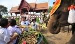 احتفالات يوم الفيل الوطني في تايلاند