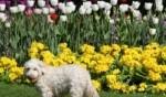 بالصور: الربيع يزور الحدائق اللندنية