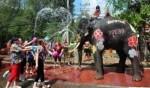 الفيلة تحتفل بمهرجان سونغكران في تايلاند