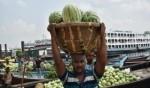 موسم البطيخ في بنغلاديش مختلف