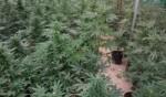 الجنوب: الشرطة تضبط دفيئة مخدرات