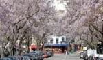 باريس ترتدي حلّتها الربيعية..صور