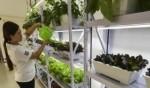 الصين تبتكر طرق جديدة للزراعة