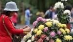 معرض زهور الاقحوان الصيني..صور