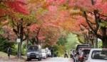 ألوان الخريفة الجميلة في كندا..صور