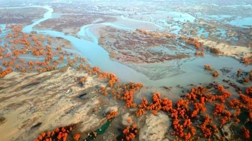 لوحات فنيّة على ضفاف نهر تاريم