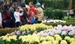 الصين: معرض زهور الأقحوان