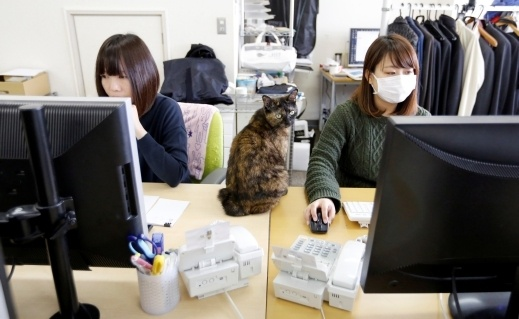 موظفون يصطحبون قططهم لعملهم