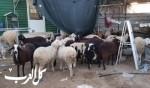 اعتقال 4 مشتبهين من مدينة قلنسوة بعد سرقة عشرات