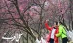 بوادر وأزهار الربيع تظهر في الصين