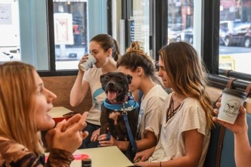 ما رأيكم بزيارة مقهى الكلاب؟