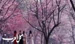 صور مذهلة: طوكيو ترتدي حلّتها الربيعية