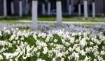 عواصم العالم ترتدي حلّتها الربيعية