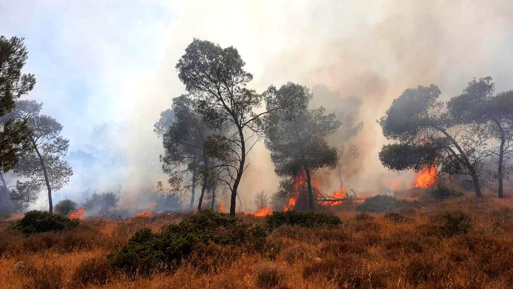 اندلاع حريق في أحراش قرب سالم