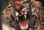 القطط القاتلة