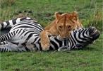 افتك حيوانات العالم