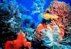 وثائقي اسرار المرجان