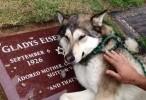 وفاء الكلب لصديقه الميت اون لاين 2015