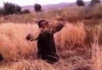 رجل بدوي يتذمر من اهل المدينة 2015