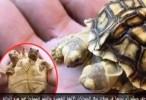 شاهدوا اغرب 10 حيوانات في العالم