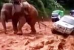 فيل ساعد سيارة الى مسلولها بعد ان انزلق مع المطر