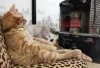 قطة تستمتع بوقتها في فصل الشتاء