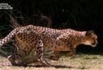 العاب القطط الكبيره وثائقي مدبلج 2016