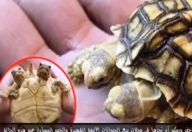 شاهدوا اغرب 10 حيوانات في العالم - غرائب عجائب اونلاين 2015