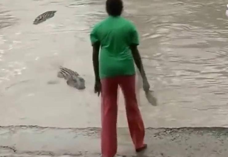 فتاة افريقية تخيف التماسيح العملاقة (بالشبشب)